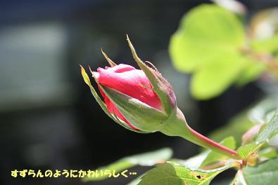 2009/04/26 その1