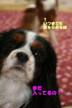 2009/01/27 その2