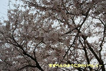 2009/04/05 その5