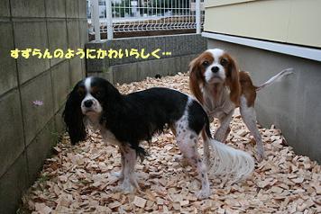 2008/10/05 その5