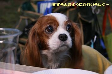 2009/04/05 その8