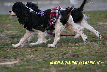 2008/12/30 その3