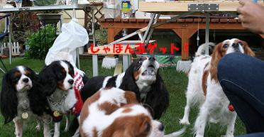 2008/10/12 その9