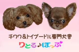 littlehop-bana-5.jpg