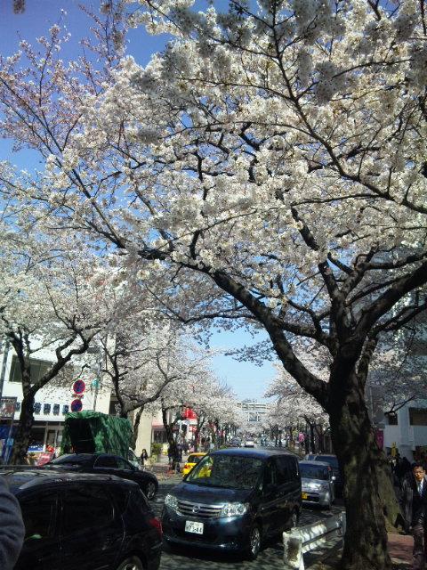 2012 桜 2