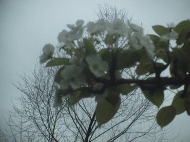 Spring! 009