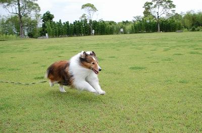 竹公園リズ