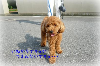 96お散歩3