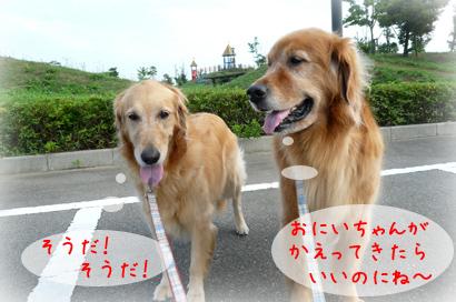 96お散歩5