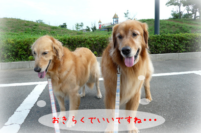96お散歩9