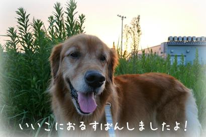 96お散歩16