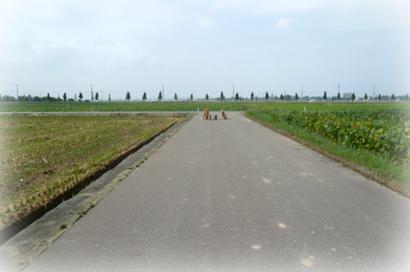 920散歩3