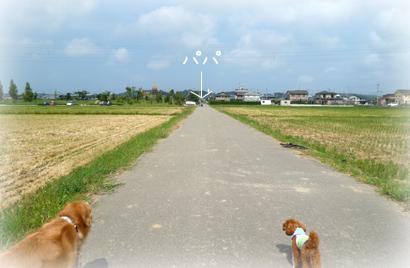 920散歩11