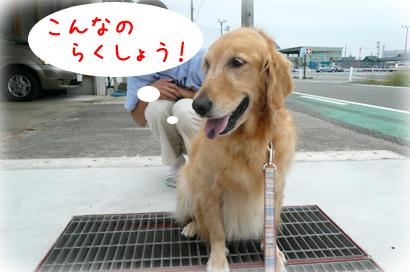 9250散歩11