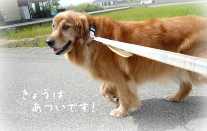 930お散歩1