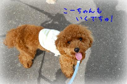 930お散歩3
