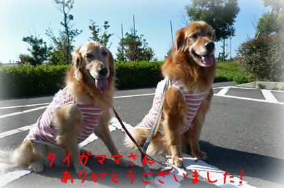 102お散歩5