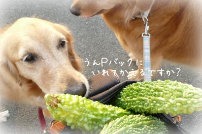 103お散歩5