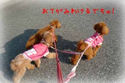 1021お散歩2