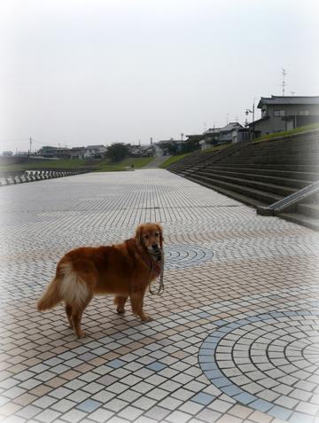 1022お散歩9