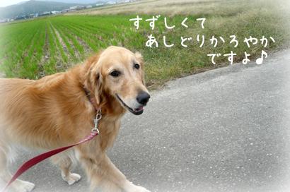 1026お散歩5