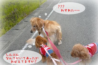 1110お散歩3