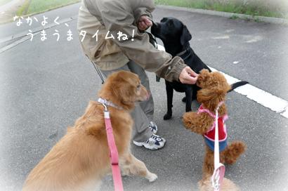 1110お散歩5