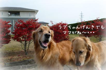 1117お散歩5