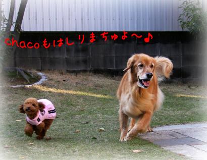 1126お庭遊び4