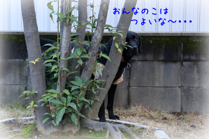 1126お庭遊び19