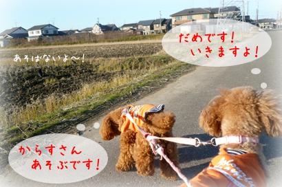 1216お散歩3