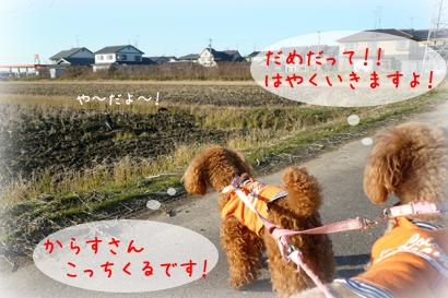 1216お散歩4