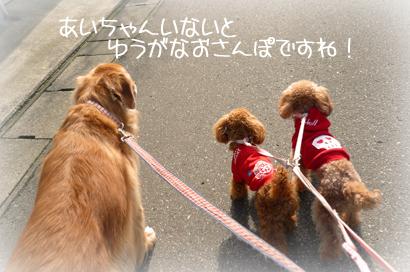 15お散歩1