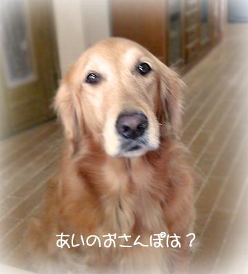 15お散歩3