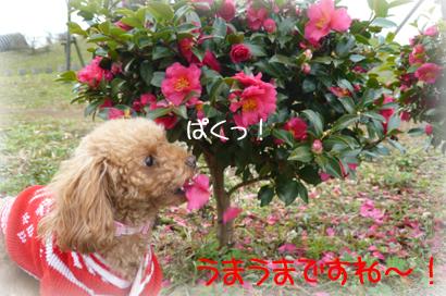 19お散歩4