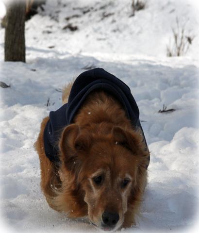 121雪遊び4