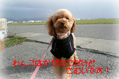 1,24お散歩4