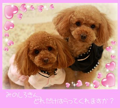 youchaco2ブログ