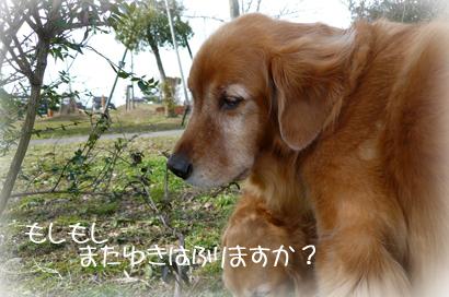 1,29お散歩4