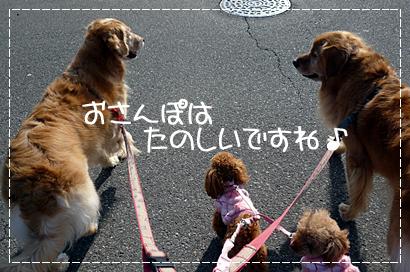 しゃんぷー7