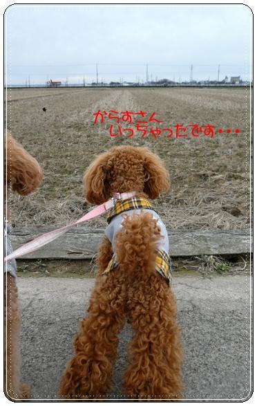 2,9お散歩4