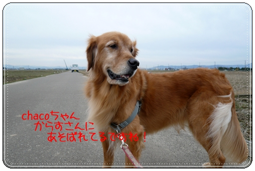 2,9お散歩5