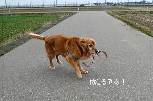 2,11おさんぽ4