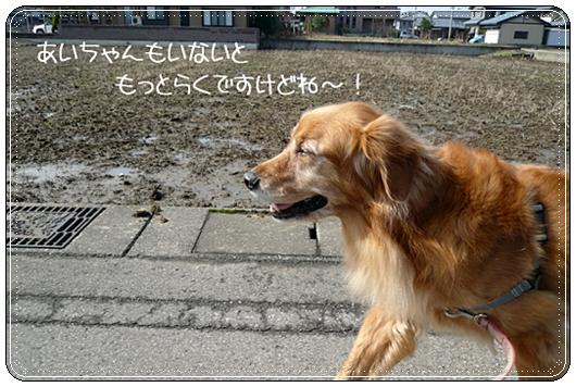2,14お散歩4