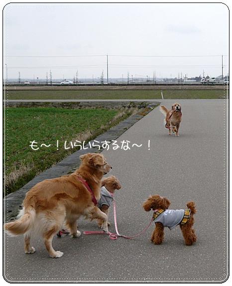 2,21お散歩6