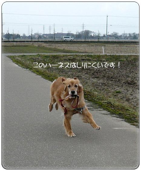 2,21お散歩7