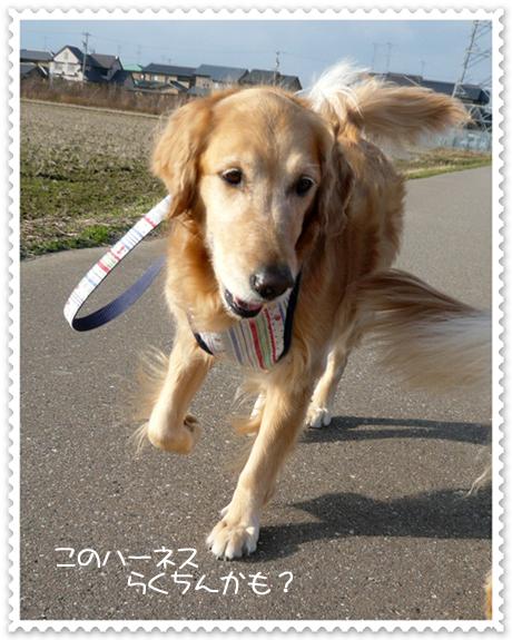 2,23お散歩3