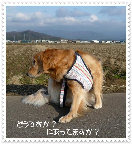 2,23お散歩9