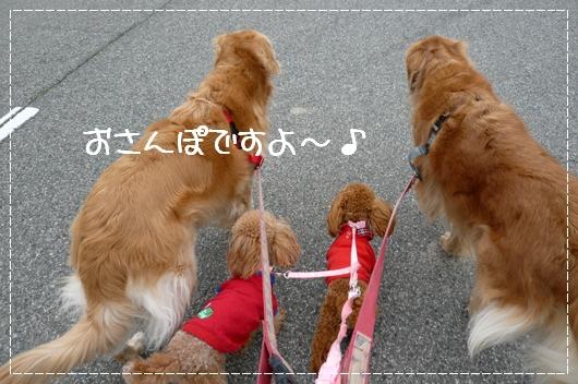 3,3お散歩1