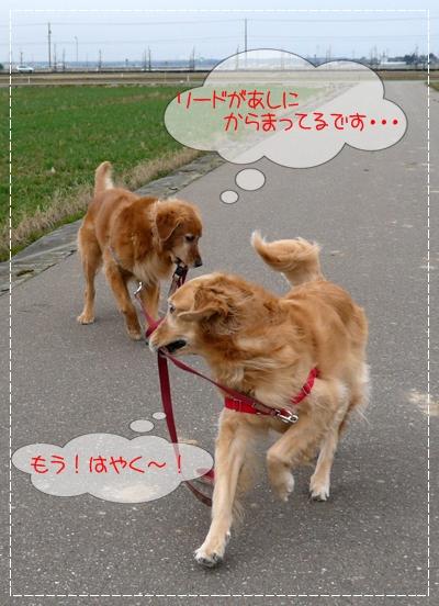 3,3お散歩4